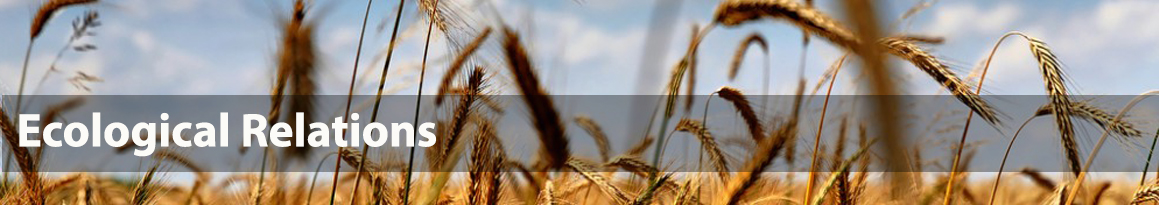 Photo of wheat field with overlaid text 'Ecological Relations'